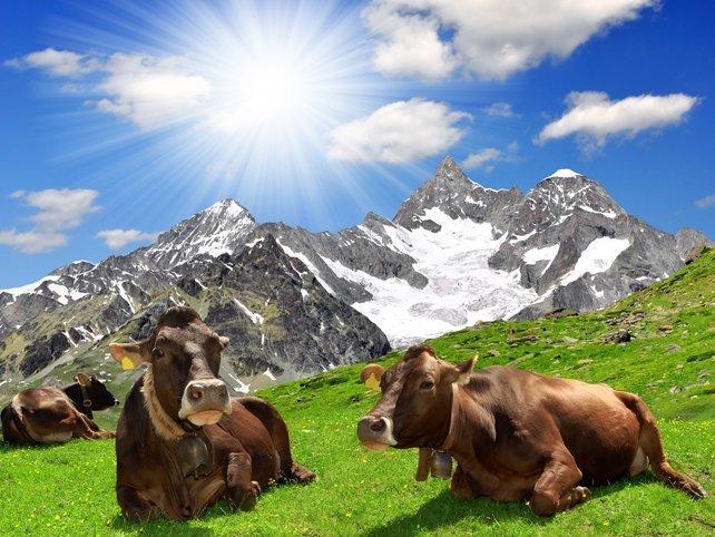 Правилно животновъдство